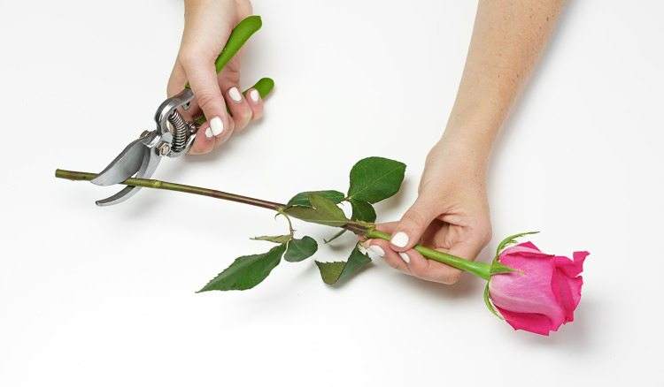 How to get flowers the right way?